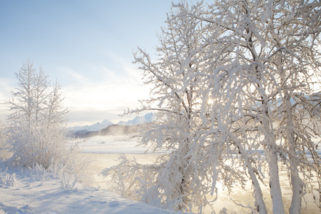 southeast alaska: Sun shining through snow covered trees along the Chilkat river in Southeast Alaska with mist rising over the snow. Stock Photo