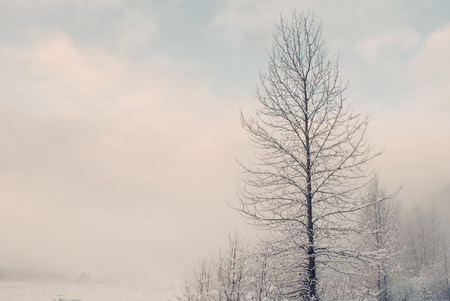 glimpse: Fog on a cold winter day with a bare birch tree and a glimpse of blue sky. Stock Photo