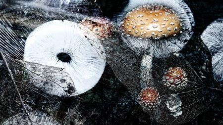 sporen: Pilze mit Sporenabdruck und Bl�tter in einem k�nstlerischen Overlay f�r einen traumhaften Blick. Lizenzfreie Bilder