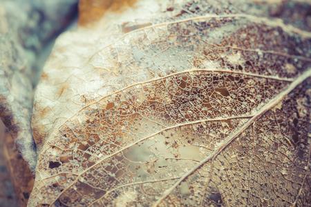 frag: Delicate leaf skeleton macro close up. Stock Photo