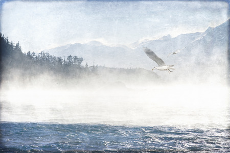 southeast alaska: Seagulls in Southeast Alaska overlaid with textures for an artistic look.