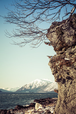 southeast alaska: Bare tree branches on a cliff by the Chilkat Inlet in Southeast Alaska on a sunny winter day. Stock Photo