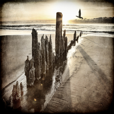 Sunset on an Alaskan beach with old wooden pillars and a bird flying by processed with textures for an artistic look. Stock Photo