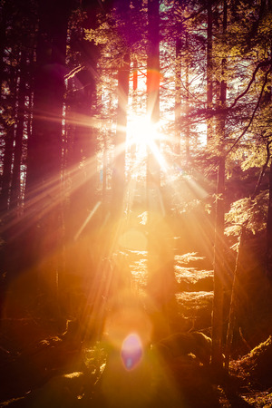coloration: Sun streaming through trees in a Southeast Alaskan forest with warm coloration. Stock Photo