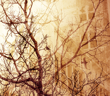 dreamlike: Bare tree branches with birds overlaid with an abandoned building for a dream-like look.