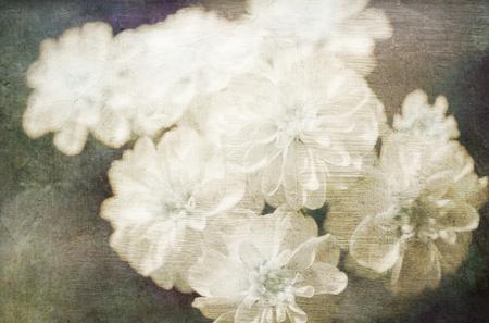 overlays: Flores blancas con superposiciones de texturas para una mirada art�stica pict�rica. Foto de archivo
