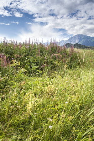 yarrow: Fireweed and tall grass in the foreground and clouds with mountains in the background in Southeast Alaska in summer.