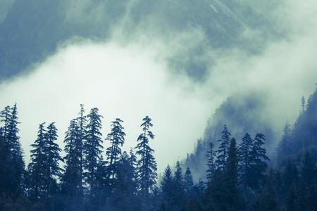 cicuta: Bajo la niebla en las montañas costeras de la Columbia Británica de Canadá en verano. Foto de archivo