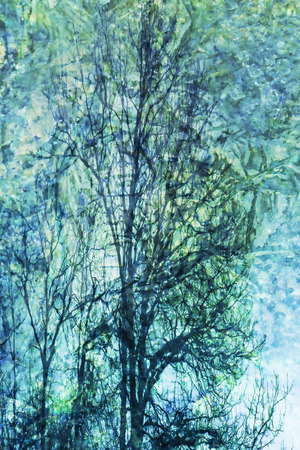photomanipulation: Tree patterned abstract in a watercolor style created with photomanipulation.