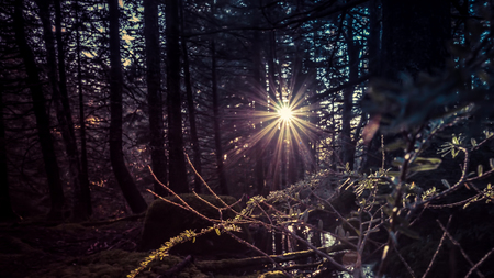 coloration: Sunburst through trees in deep forest with coloration for a magical look. Stock Photo