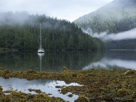 sheltered: Sailboat at anchor in a sheltered cove in British Columbia with low mist and seaweed.