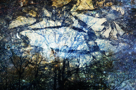 photomanipulation: Surreal photomanipulation with trees, stars and patterned textures. Stock Photo