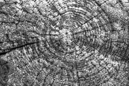 Vorst over een cut boom einde met ring patronen.