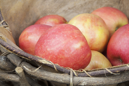 Pink lady (Cripps pink) apples in a rustic basket close up.