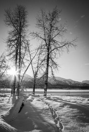 southeast alaska: Sunburst from the setting sun through trees by the Chilkat River in Southeast Alaska in winter in black and white.