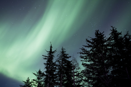 cicuta: Aurora borealis in an Alaskan night sky with spruce trees. Foto de archivo