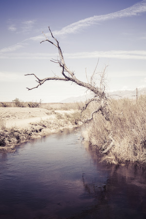 high sierra: Water diversion canal with a dead tree in the high desert near Bishop California.