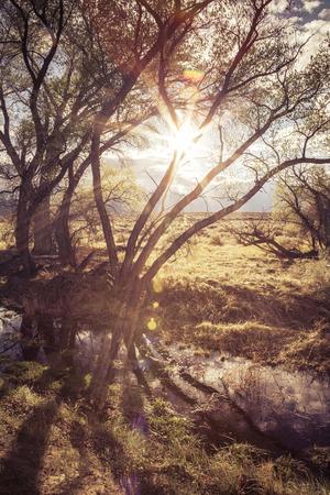 sierras: Sunburst through cottonwood trees by a creek near Bishop California.