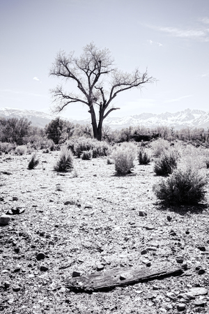 sierras: Harsh desert scene with a lone tree processed with vintage coloration. Stock Photo