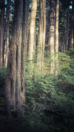 Forest in Southeast Alaska with sunlight in summer. Imagens