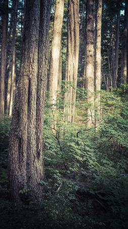 cicuta: Forest in Southeast Alaska with sunlight in summer. Foto de archivo