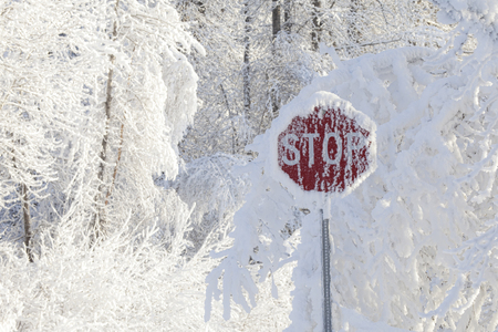 sign in: Stop sign covered with snow with frosty tree branches in the background.