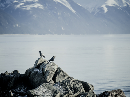 Two crows looking opposite directions on a rock in Southeast Alaska overlooking the sea.