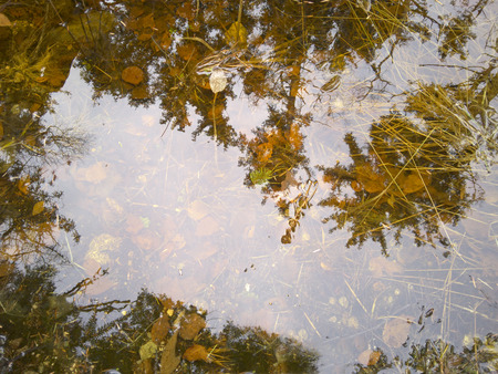 Reflections of trees in a forest pond with leaves and dead grass in fall.