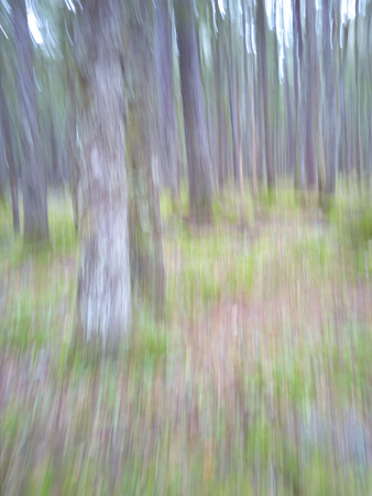 Intentional camera motion blur of a forest in fall for a unique impressionistic look at nature.
