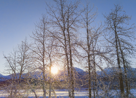 Winter sunset on the Chilkat river near Haines Alaska through birch trees.