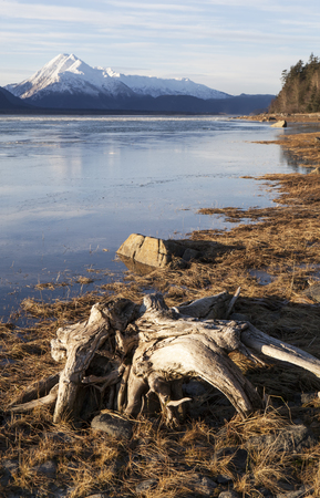 Driftwood on the beach of the Chilkat River Estuary near Haines Alaska in early winter. Stock Photo