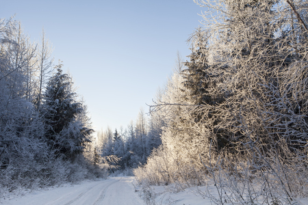 Winter in rural Southeast Alaska after a light snow on a dirt road with frost on the trees near sunset.