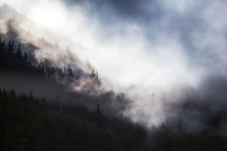 Fog and low clouds moving through an Alaskan spruce forest with blue sky peeking out. Stock Photo