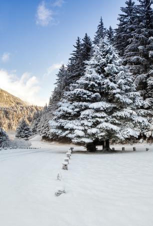 Entrance to Chilkoot Lake State Park in winter with snow on beautiful spruce tree on a sunny day.