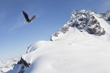 Bald eagle flying near snow covered mountain peak in Alaska.
