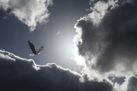 Bald eagle flying toward the sun with dramatic clouds.