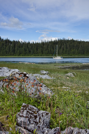 Sailboat at anchor in a cove near Dundas Bay in Southeast Alaska in summer with wildflowers in the foreground.