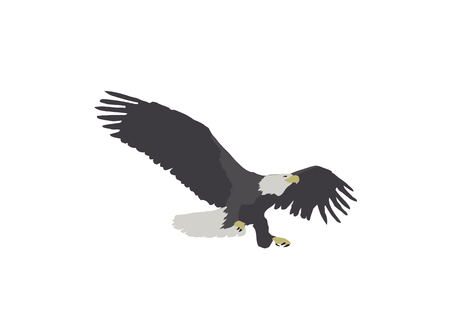 Simple illustration of a bald eagle landing with tallons out isolated on white. Фото со стока