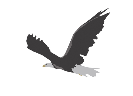 Simple flying eagle illustration isolated on white.