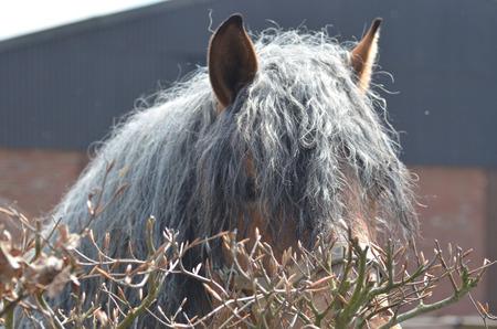 bashful: Bashful Horse Stock Photo
