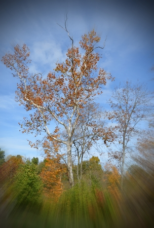 Autumn tree with zoom burst effect framing