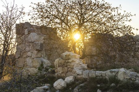 A ruined old building against the background of the sunset. A large tree grows out of a crack, with the setting orange sun on its background.