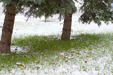 grass covered by a snow photo