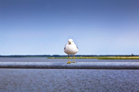Single gull sitting on bar on the beach Stock Photo