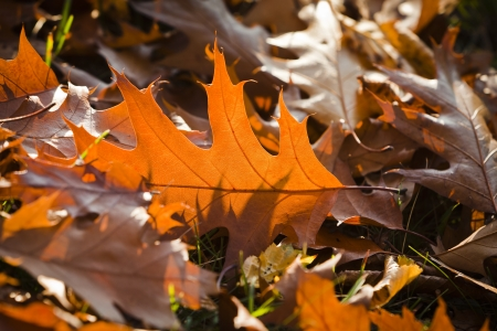 discolored: autumnal mood scroll discolored - autum atmosphere with colored leaves