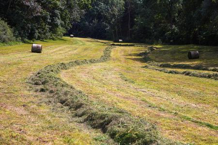 hey: meadow with fresh cut hey