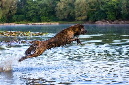puta: perro de saltar en un lago