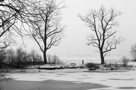frozen lake: winter landscape of a frozen lake with trees