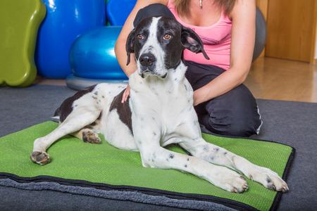 Kranken Hund immer manuelle Behandlung Standard-Bild - 41682086