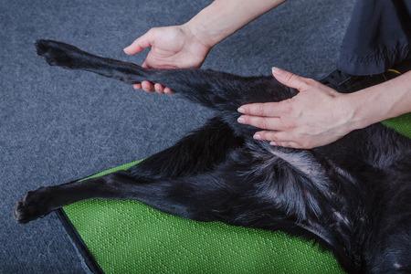 kutya fizikai kezelés